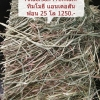 หญ้าทิมโมธี แอนเดอสัน พรีเมี่ยมเกรด แบบฟ่อน 25 kg
