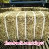 หญ้าทิมโมธี แคนาดา ฟ่อน ขนาด 20KG