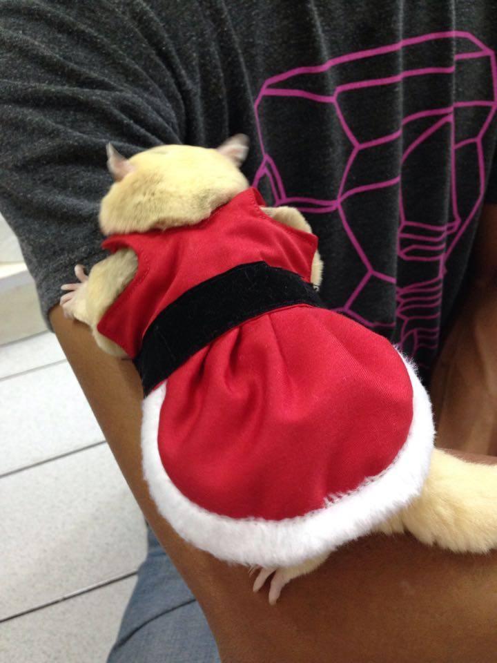 SugarGang ชุดซานตารีนา+หมวก ไซส์ M (เด็กโตปกติ-ท้วม)