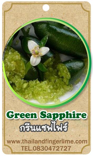ต้นมะนาวคาเวียร์เสียบยอดสายพันธุ์ Green Sapphire Size M