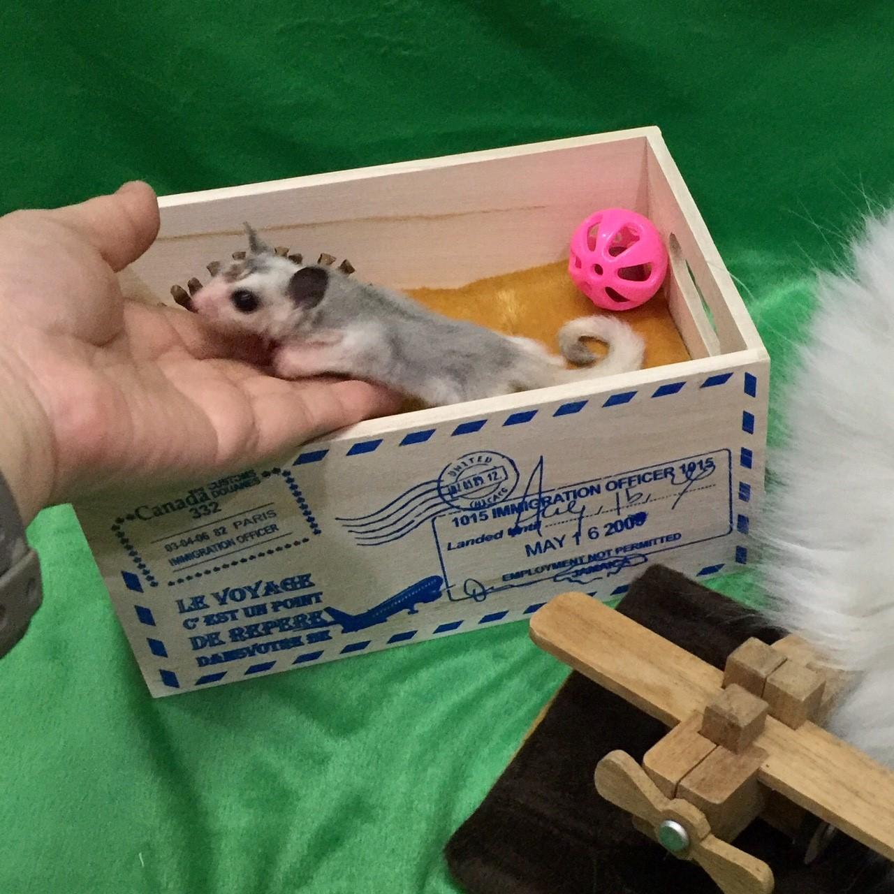 Spider กล่องนอน Mail Box