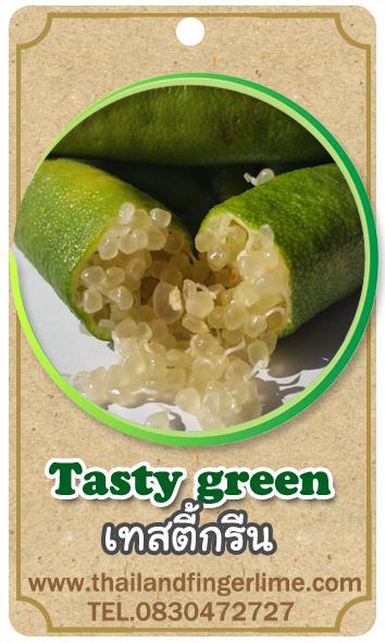 ต้นมะนาวคาเวียร์เสียบยอดสายพันธุ์ Tasty Green Size M