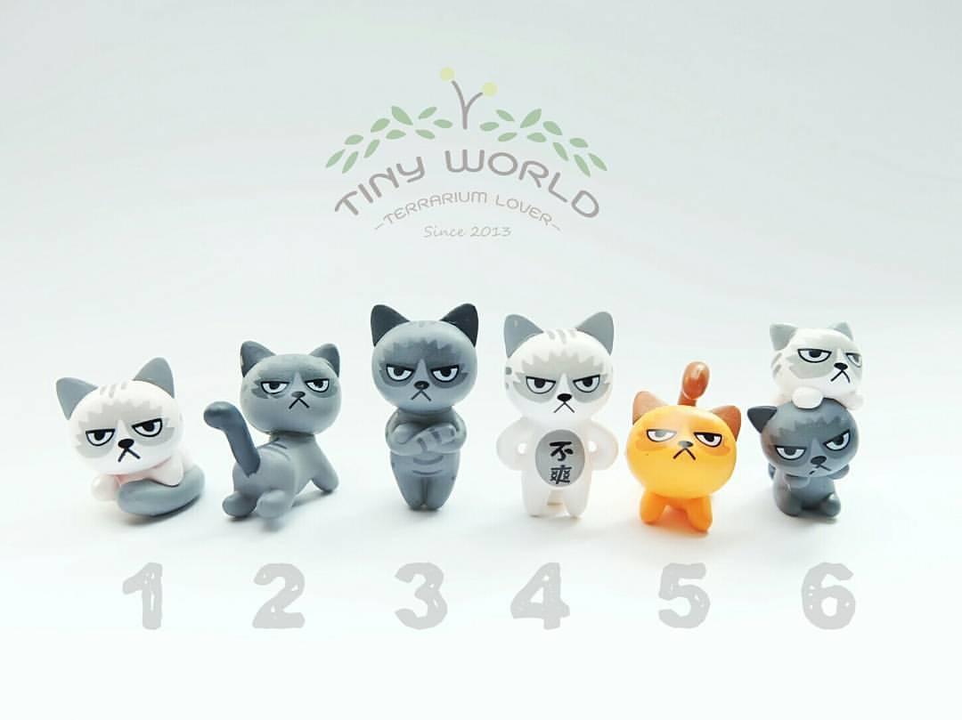 แมวกริ้ว 6 ตัว