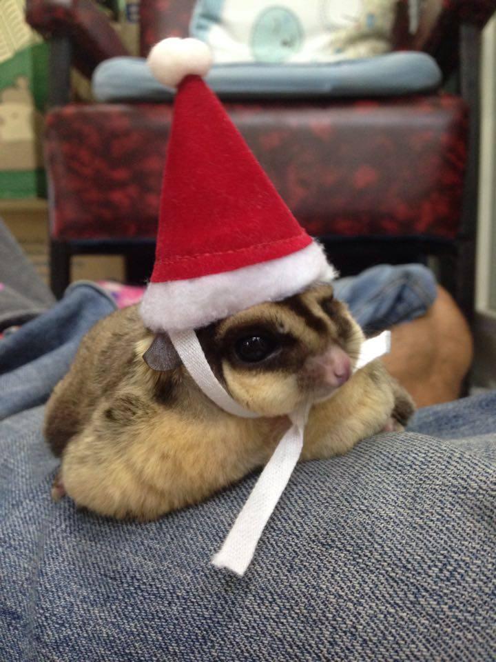 SugarGang ชุดซานต้า+หมวก ไซส์ M (เด็กโตปกติ-ท้วม)