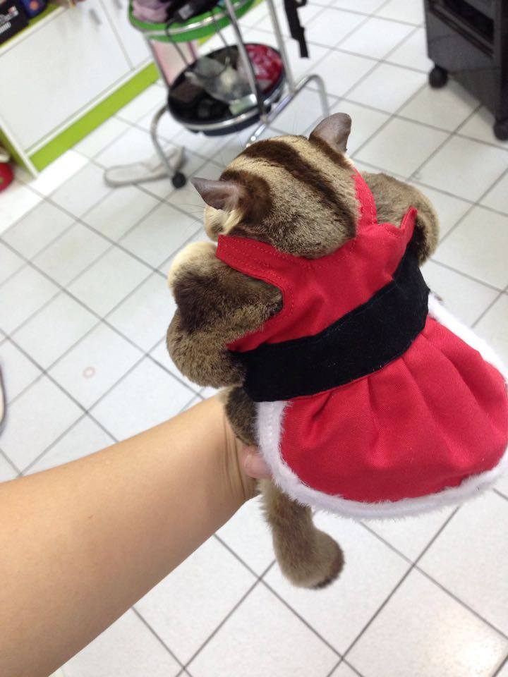 ชุดซานตารีนา+หมวก ไซส์ L (เด็กโตท้วม-อ้วนมาก)