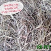 หญ้าทิมโมธี แคนาดา ก้านสั้น ขนาด 1 กิโลกรััม