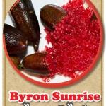 ต้นมะนาวคาเวียร์เสียบยอด สายพันธุ์ Byron sunrise Size M