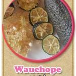 ต้นมะนาวคาเวียร์เสียบยอดสายพันธุ์ Wauchope Size M