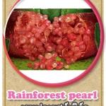 ต้นมะนาวคาเวียร์เสียบยอดสายพันธุ์ Rainforest Pearl Size L
