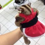 SugarGang ชุดซานตารีนา+หมวก ไซส์ L (เด็กโตท้วม-อ้วนมาก)