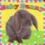 หนังสือผ้า Baby Bunny จาก Priddy Books thumbnail 1