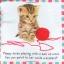 หนังสือผ้า Baby Bunny จาก Priddy Books thumbnail 4