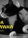 Panda & Pawwaw แพนด้า และ แป๊วแว้ว [mr09]