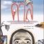 ซัลวาดอร์ ดาลิ เรื่องเหนือจริงยิ่งกว่าภาพเหนือจริง (Dali & I: The Surreal Story) thumbnail 1