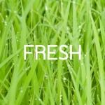 ประเภทน้ำหอม Fresh